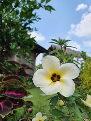 Beautiful White Flower with Yellow Color Vibrance in Green Garden