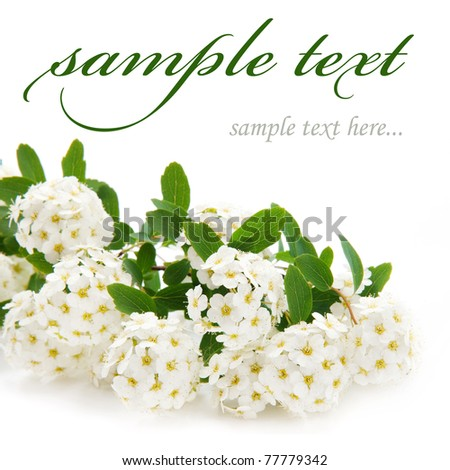 beautiful white flowers isolated on white background