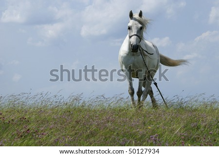 beautiful white horse against blue sky with white clouds stock photo
