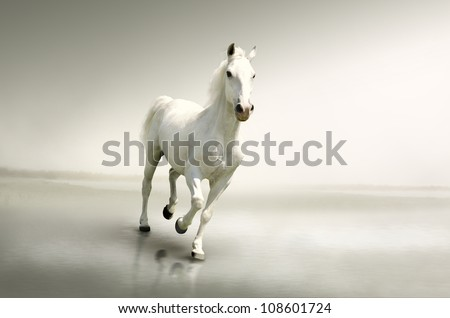 Stock Photo Beautiful white horse in motion