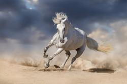 Beautiful white horse run in desert against dramatic sky