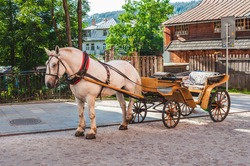 Beautiful white horse. Traditional horse drawn carriage on street in Zakopane, Poland. Tourist attraction.