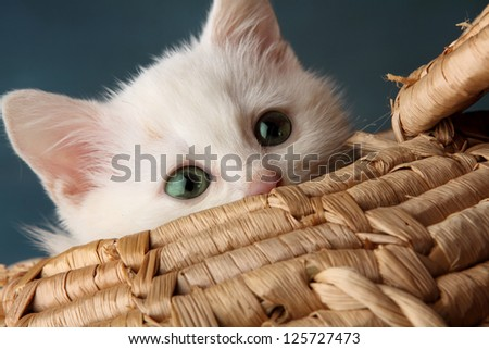 beautiful white kitten playing in a basket