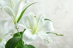 Beautiful white lilies on light background, closeup