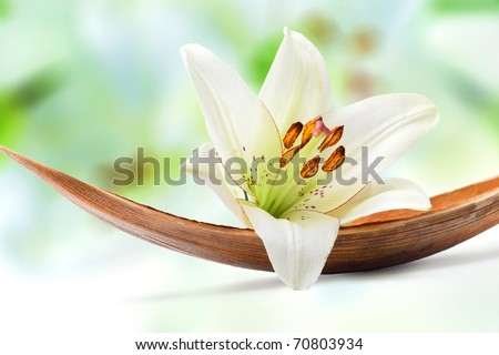 Beautiful white lily flower on a coco palm leaf, isolated on white