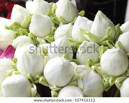 Beautiful white lotus bud in market.