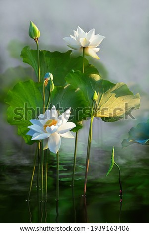 Beautiful white lotus flower in the lake and lotus flower plants, pure white lotus flower