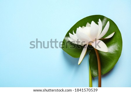 Beautiful white lotus flower with green leaf on light blue background, top view. Space for text Foto stock ©