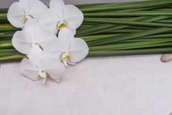 beautiful white orchid flower and stone and green leaves background
