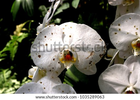 Beautiful white orchid flower on tree. #1035289063