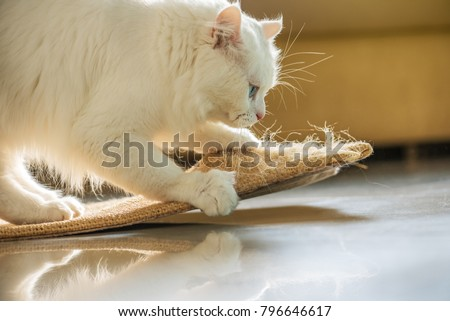 Beautiful white persian cat and scratching post. #796646617