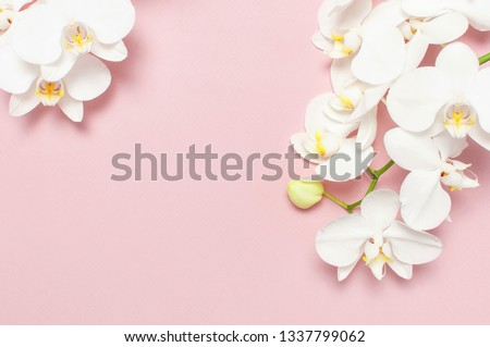 Beautiful White Phalaenopsis orchid flowers on pastel pink background top view flat lay. Tropical flower, branch of orchid close up. Pink orchid background. Holiday, Women's Day, Flower Card, beauty  Сток-фото ©