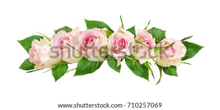 Beautiful white rose flowers line arrangement isolated on white. Top view. Flat lay.