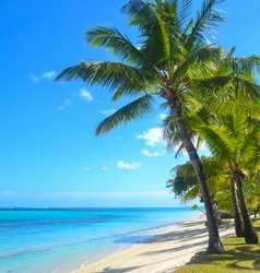 Beautiful white sand beach with palm trees, turquoise ocean water and blue sky with clouds in sunny day
