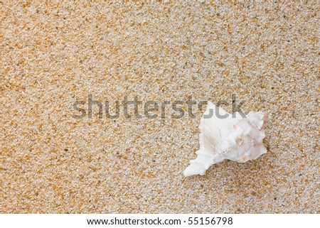 Beautiful white sea shell on sand background