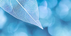 Beautiful white skeletonized leaf on light blue background with round bokeh. Expressive artistic image of beauty and purity of nature.