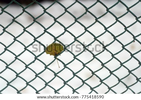 Beautiful white snow and yellow leaves of trees on a fence close-up. Winter and autumn holiday background #775418590