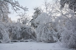 Beautiful white winter landscape. Snowy winter in a deciduous forest with a deep snow carpet on the ground, bowed branches of trees and bushes under the weight of heavy white snow.
