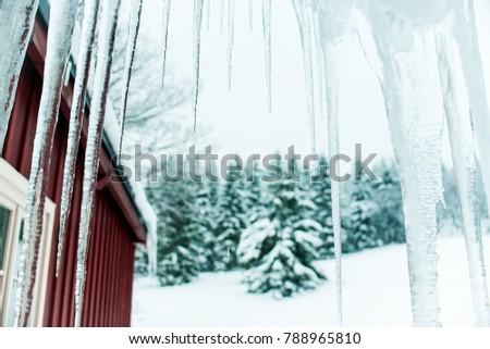 beautiful white winter season...