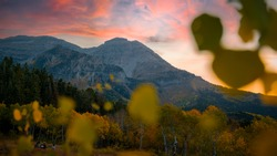 Beautiful wide landscape of a golden yellow and green aspen tree forest with a large rocky mountain in the background up the famous alpine loop near Provo, Utah during a warm autumn sunset in October