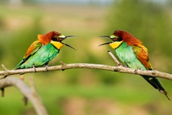 beautiful wild colorful birds look at each other