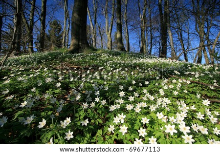 Beautiful wild flowers in forest