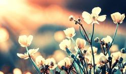 Beautiful wild flowers in nature close-up macro.