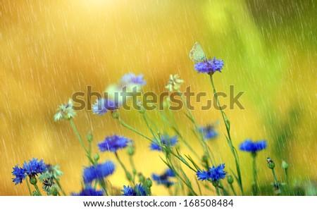 Beautiful wild flowers in summer rain