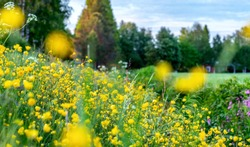Beautiful wild flowers on the roadside and ditch, summer meadow, sunset time - close up photo with blurry background, Sweden landscape