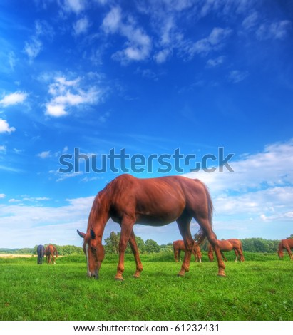Beautiful wild horse on the perfect field.