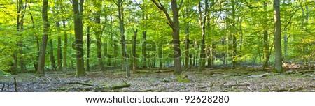 beautiful wild oak forest