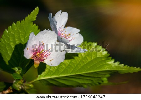 beautiful wild park flowers with shinning sun rays from above Stockfoto ©