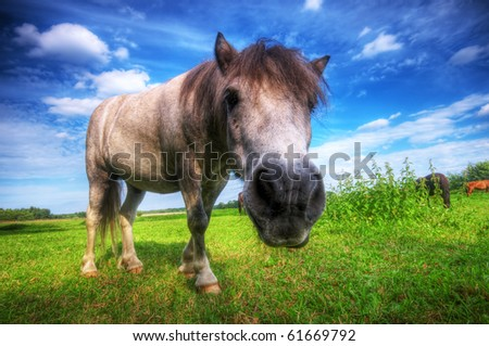 Beautiful wild young horse on the summer field.