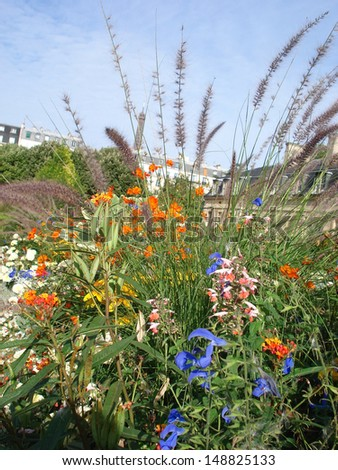 Beautiful wildflowers in Paris garden with Eiffel Tower on the background.