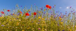 Beautiful wildflowers on a lovely sunny day