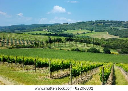 Beautiful wine fields in Italy