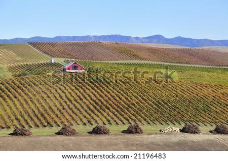 Beautiful Winery  in a Vineyard