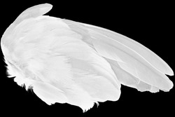 Beautiful wing white feather isolated on black background