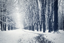 Beautiful winter alley. Park trees covered with snow.