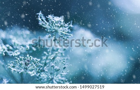 Beautiful winter background with dry plants covered hoarfrost in winter morning. Soft focus #1499027519