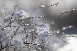 Beautiful winter close up landscape with small twigs covered with snow and ice with light sparkles and water drops