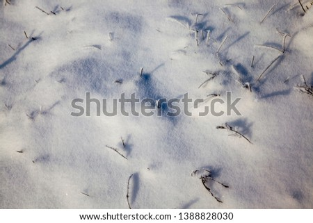 beautiful winter close-up with the road and other plants under the snow in winter snowfall, sunny weather, beautiful winter picture