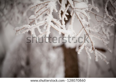 Beautiful winter detail photo taken in polish Beskidy mountains - Rogacz hill