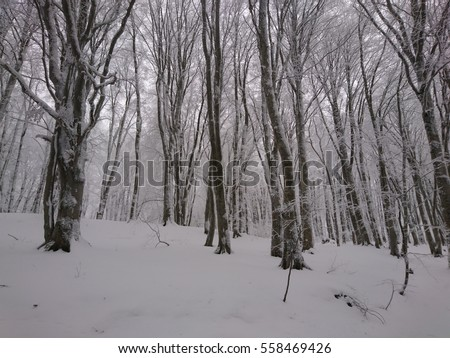 Beautiful Winter Forest Background Snowy Wallpaper