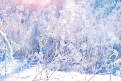 beautiful winter landscape. frozen grass, nature background. frosty weather. cold season. Winter wonderland scene, frozenned flower