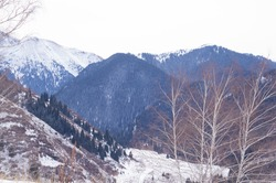Beautiful winter landscape in the mountains. Mountains with snow and fir trees. A little-visited tourist route without ice.