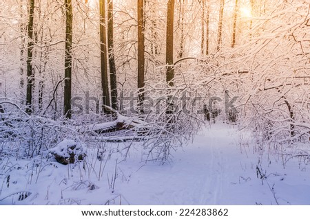 Beautiful winter landscape. Light and trees covered with snow