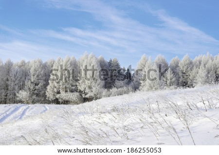 Beautiful winter landscape, snow covered trees