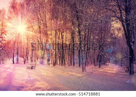 beautiful winter landscape sunset in winter. color in nature. winter scene. instagram toning effect. retro style. soft light effect