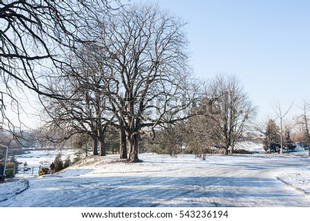 Beautiful Winter Landscape. Winter Forest. Winter Landscape, Background, space. Landscape. Winter Landscape                 #543236194